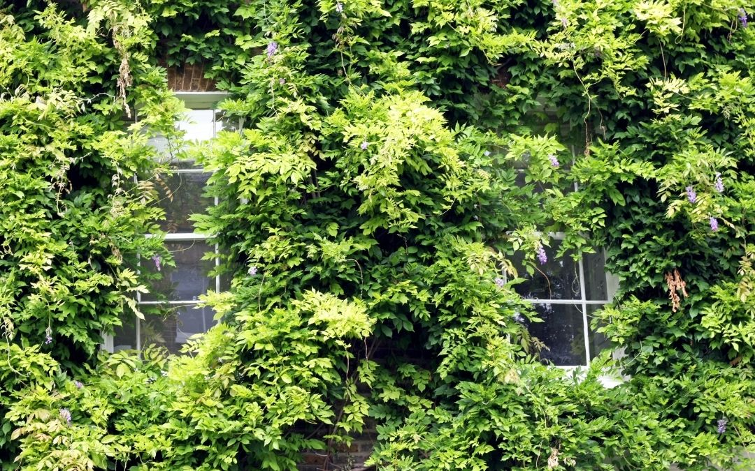 windows-covered-by-bushes-home-security-Weaver-Exterior-Barrie