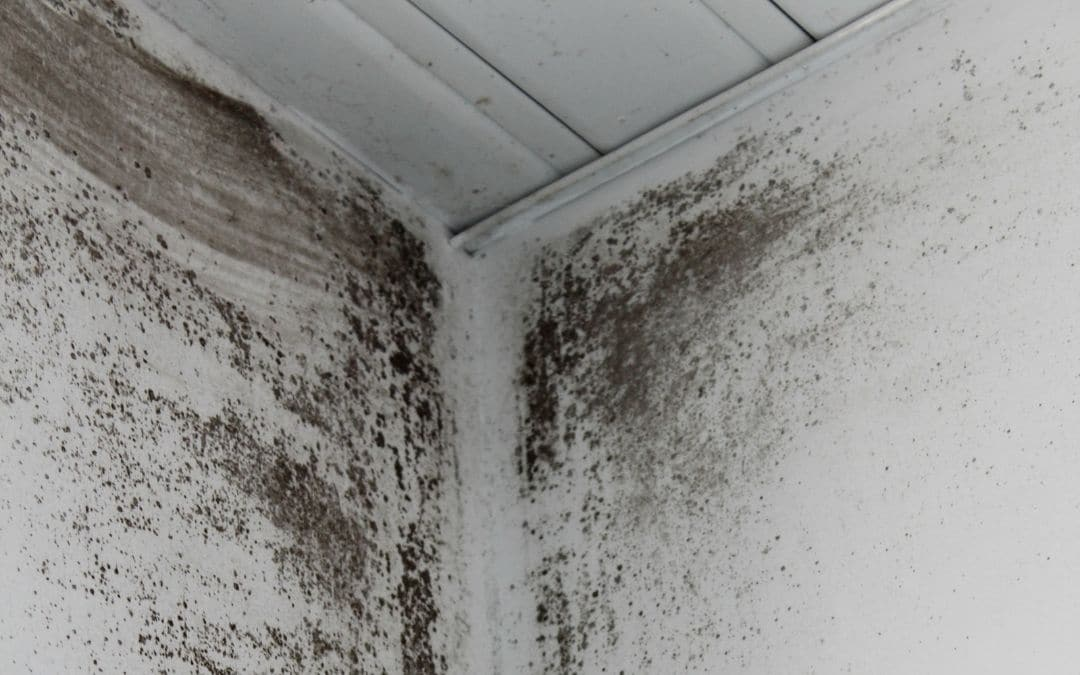 damaged-eavestroughs-lead-to-mould-and-mildew-Weaver-Exterior-Barrie