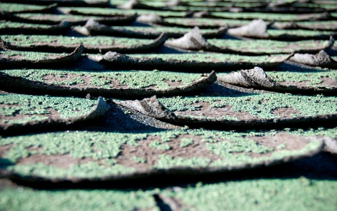 check-shingles-on-roof-when-buying-a-home-Weaver-Exterior