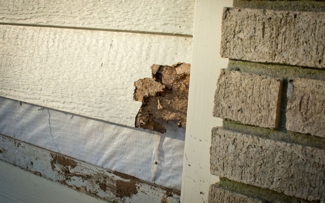 dry-rot-from-inside-of-siding-needs-to-be-replaced-Weaver-Exterior-Remodeling